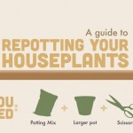 A Guide To Repotting Your Houseplants