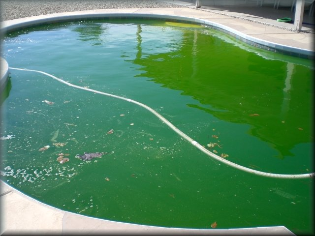 Nasty Green Pool